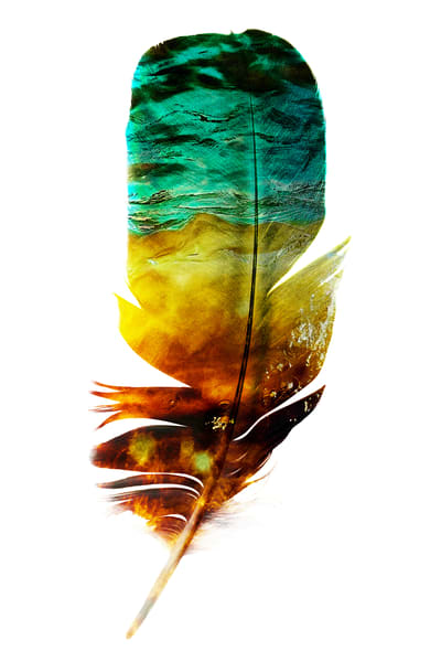 Water Feather, by Laura Grisamore