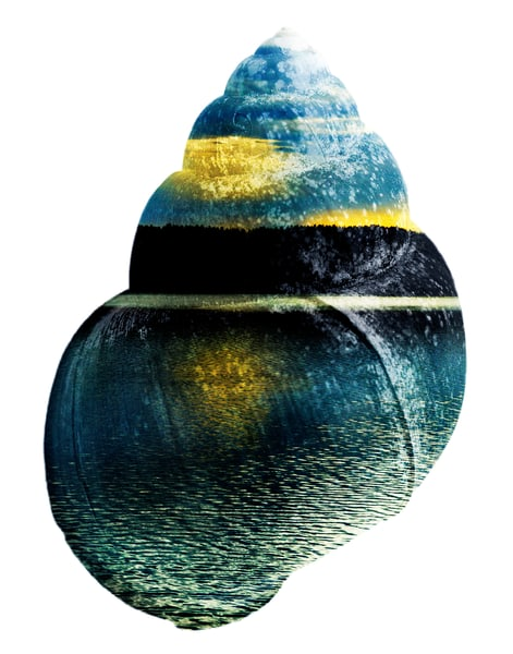 Blue Hour Shell,  by Laura Grisamore