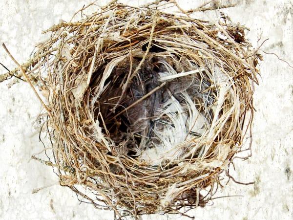Feather Nest Art | studio176