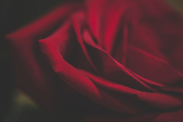 A Rose Is A Rose Art | Terry Lee Cafferty
