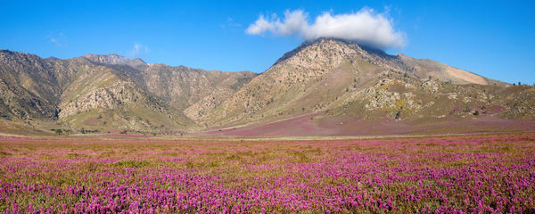 Eastern Sierra Bloom Photography Art | Josh Kimball Photography