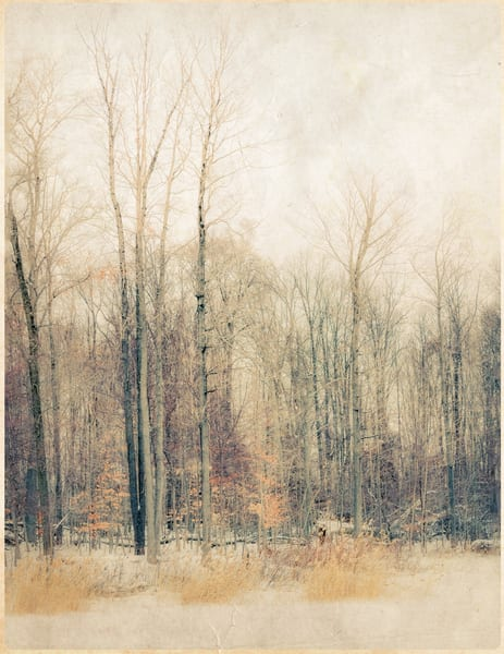 Soft Forest Tones