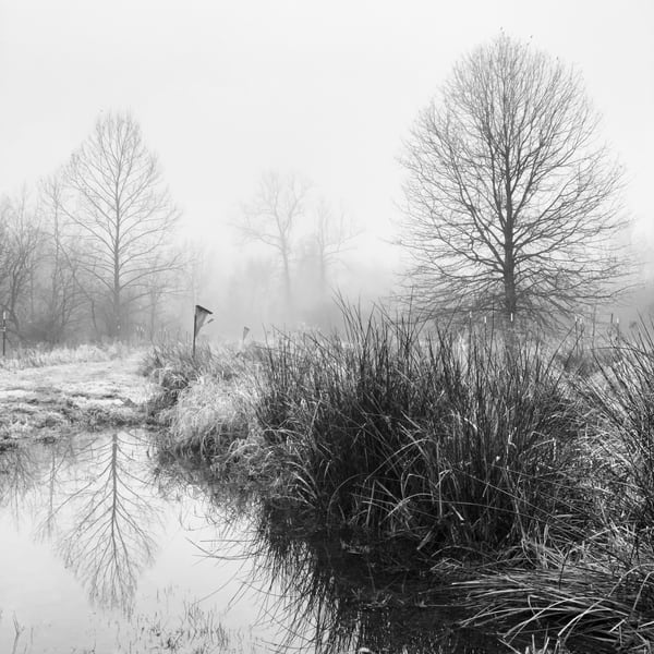 Birdhouse In Fog Photography Art | Roman Coia Photographer