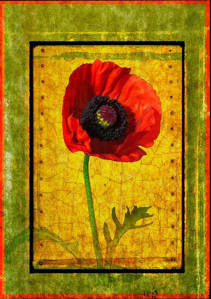 Poppy Photography Art | Doug Landreth Photography