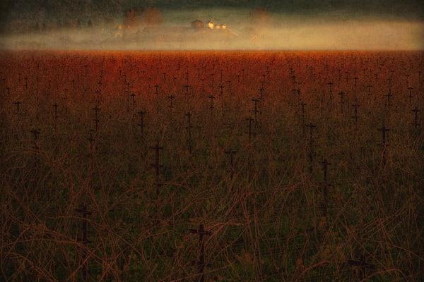 Vinyard Crosses Photography Art | Doug Landreth Photography