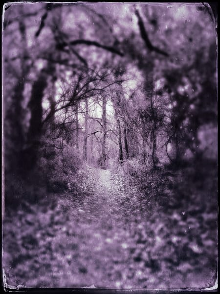 Follow The Path|Fine Art Photography by Todd Breitling