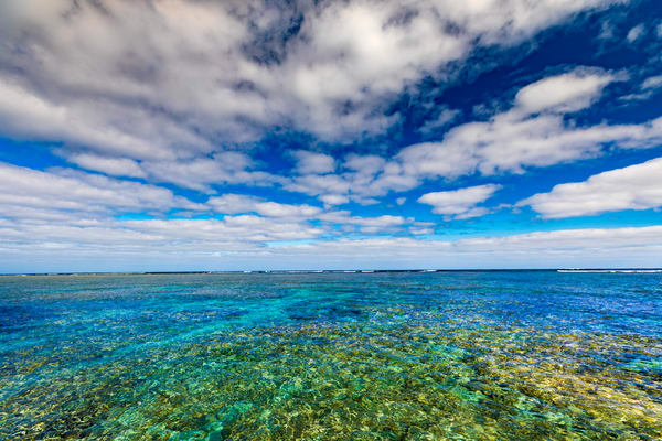 The Reef Photography Art | Laura Tidwell Photography