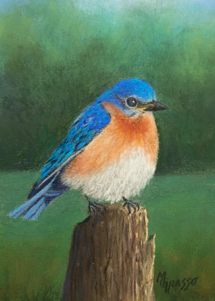 Bluebird Resting Art | Mark Grasso Fine Art