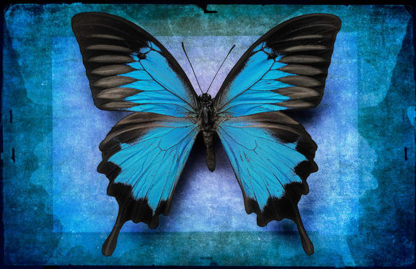 Blue Ulysses   Limited Edition Print Photography Art | Doug Landreth Photography