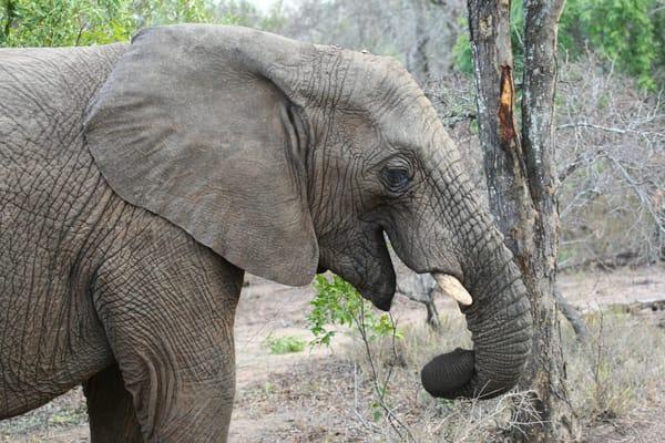 Elephant  Art | DocSaundersPhotography