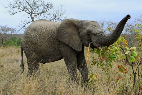 Elephant 2 Art | DocSaundersPhotography