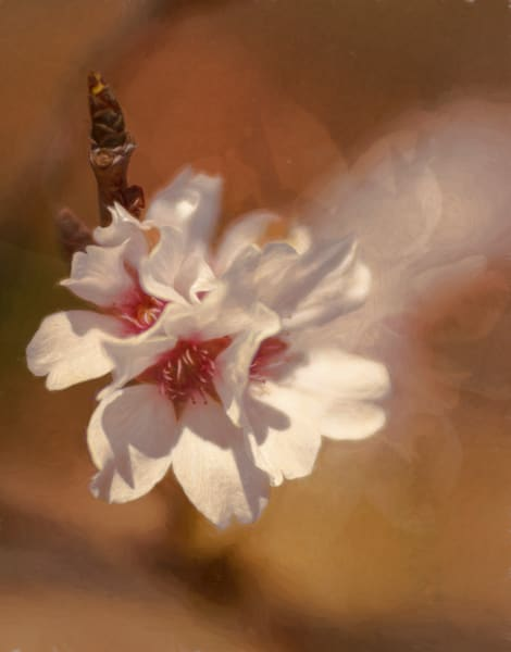 Life With Blossoms Photography Art | Sheryl's Virtual Garden