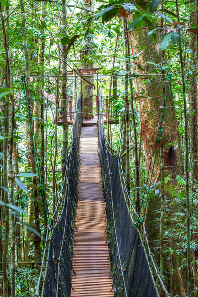 Amazon Jungle Bridge Photography Art | Michael Scott Adams Photography