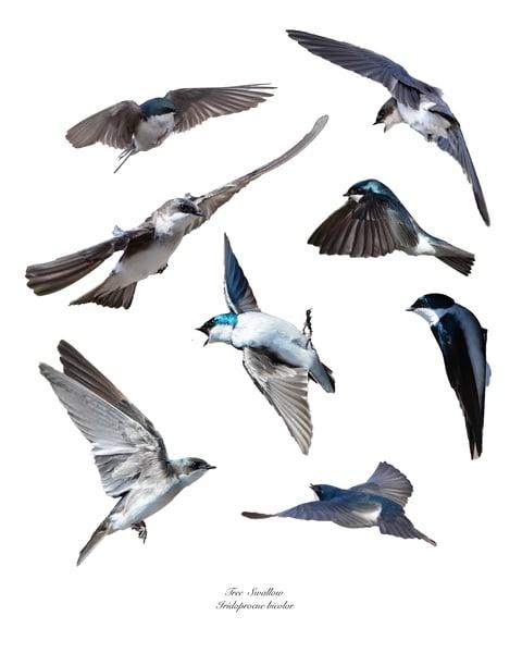 Swallows Composite Photography Art | offleashphotography