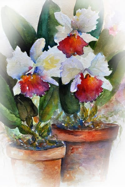 Orchid Print, From an Original Watercolor Painting