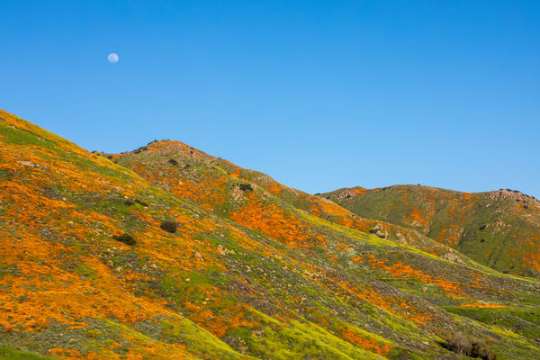 Moon Over The Super Bloom   Wide Photography Art | Michael Scott Adams Photography