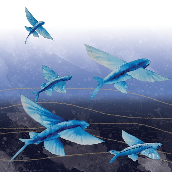fyingfish shibori waves