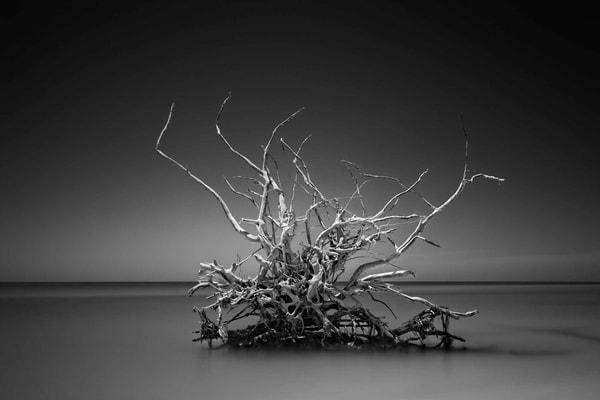 Crown Of Thorns Photography Art | DE LA Gallery