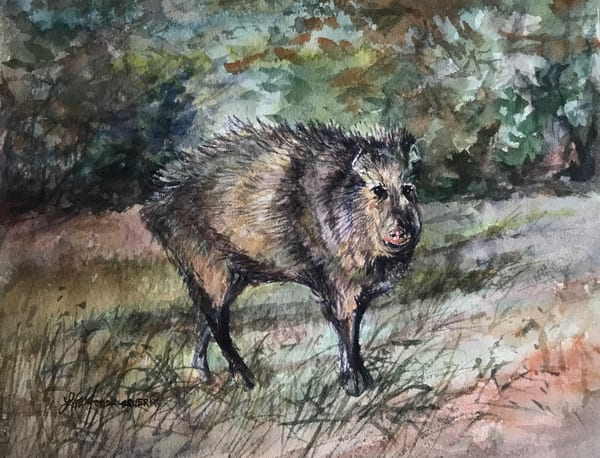 Lindy Cook Severns Art | Javelina With An Attitude, original watercolor