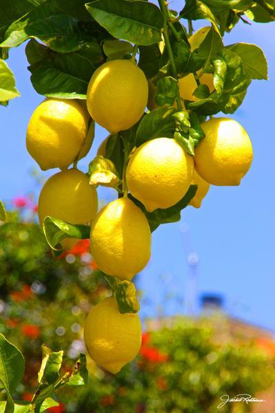 lemons food natural selection