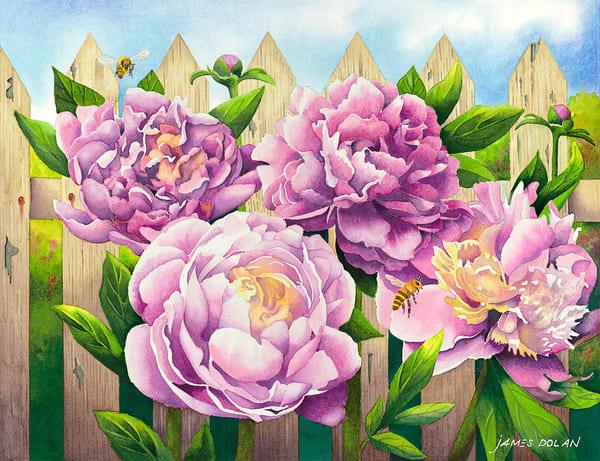 """Pink Peonies"" fine art print by Jim Dolan."