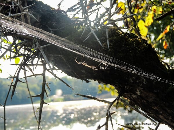 Charlotte's Web Photography Art | N2 the Woods Photography