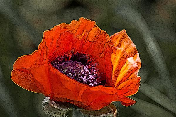 Bloomin' Poppy