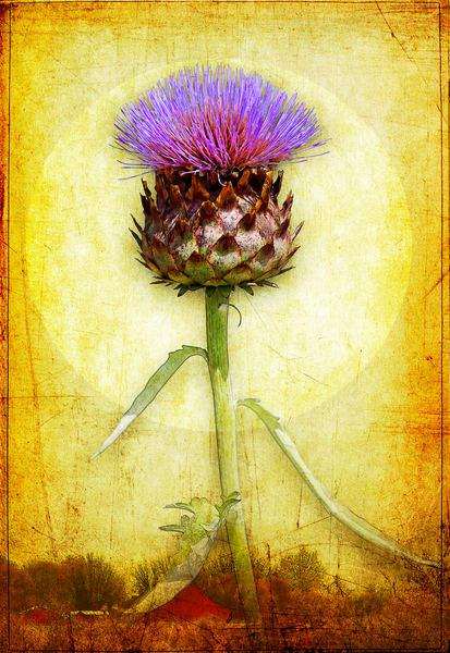 Artichoke Blossom Photography Art | Doug Landreth Photography