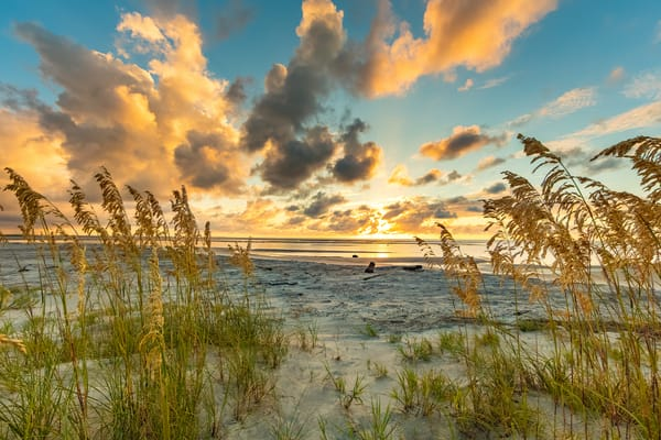 sea_oats_sunrise