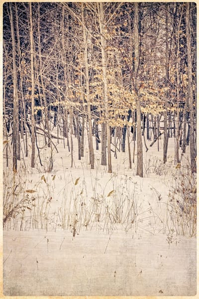 Winter Woods Photography Art   Doug Landreth Photography