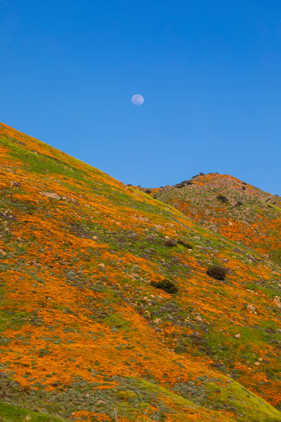 Moon Over The Super Bloom Photography Art | Michael Scott Adams Photography