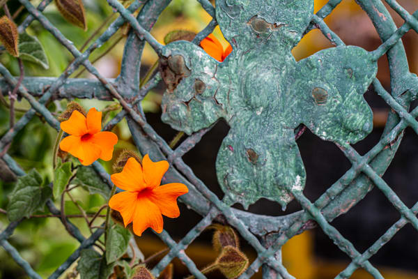 Patina Flowers Photography Art   Michael Scott Adams Photography