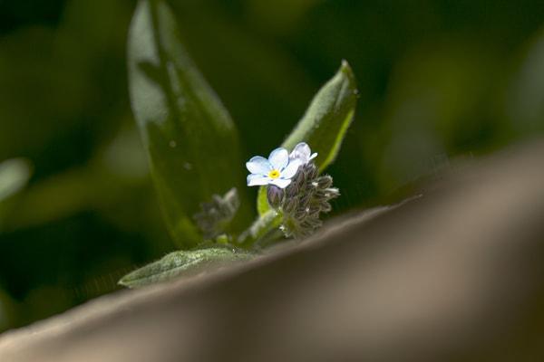 Single Bloom Photography Art | Michael Scott Adams Photography