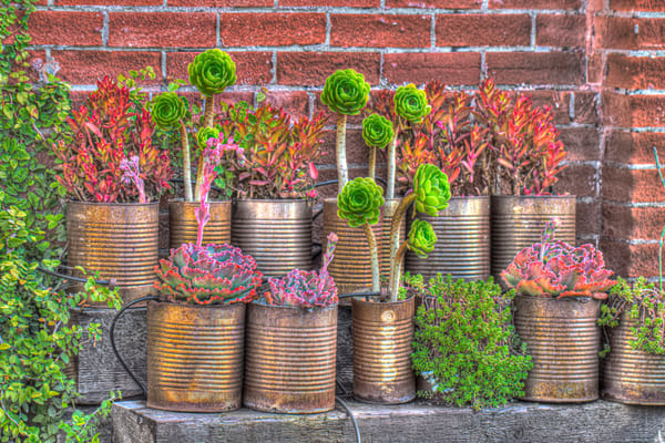 Succulents In Rusted Cans Photography Art | Michael Scott Adams Photography