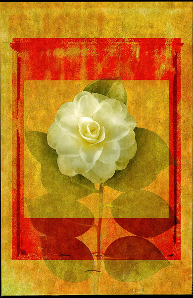 Camellia   Limited Edition Print Photography Art | Doug Landreth Photography
