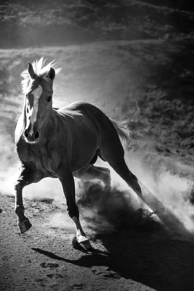 Flight Photography Art | Sydney Croasmun Photography