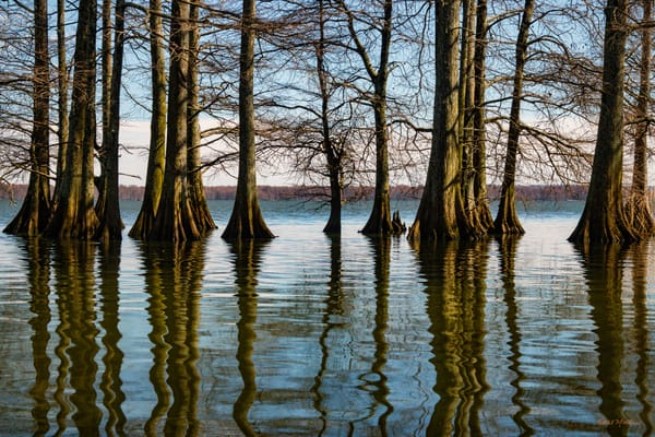 Cypress Trees Reflection 5490   Photography Art | Koral Martin Healthcare Art