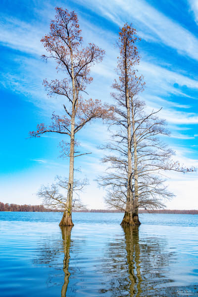 Cypress Trees Reflection 478   Photography Art | Koral Martin Healthcare Art