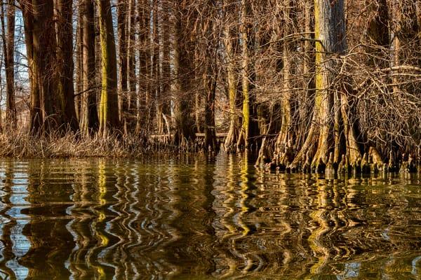 Cypress Trees Reflection Reelfoot Lake 5472   Photography Art | Koral Martin Healthcare Art