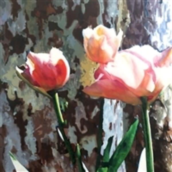Tulip trio ygnrhk dtf7ki