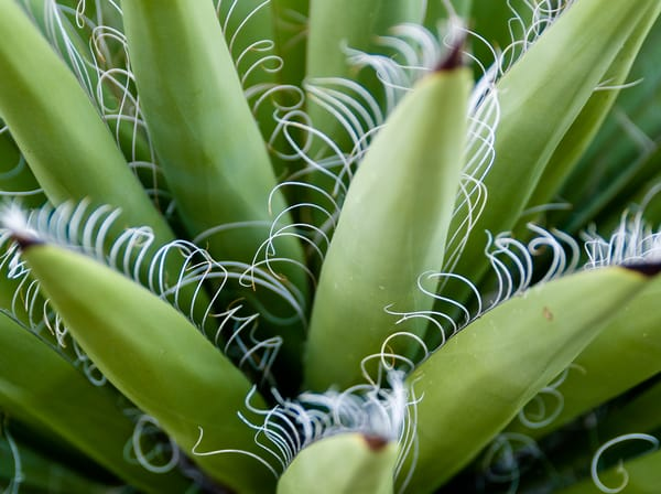 Agave Up Close | Nature Art photography
