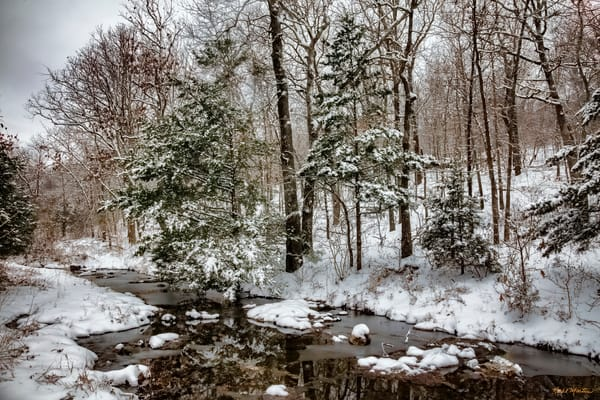 Meandering Creek In The Winter At Wildcat Glades 4298 Photography Art | Koral Martin Healthcare Art