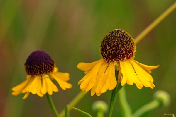 Yellow Wildflower Wet 1126   Photography Art | Koral Martin Healthcare Art