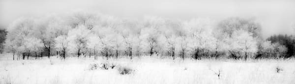 Winterscape, by Laura Grisamore