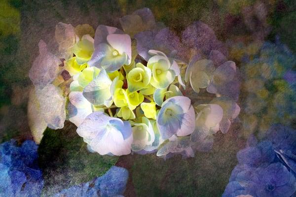 Textured Hydrangeas  Art | studio176