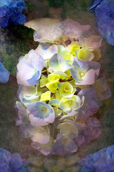 Vertical Textured Hydrangeas, by Laura Grisamore