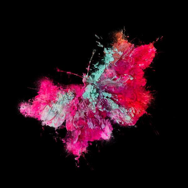 Butterfly 2 Photography Art | Inga Pae