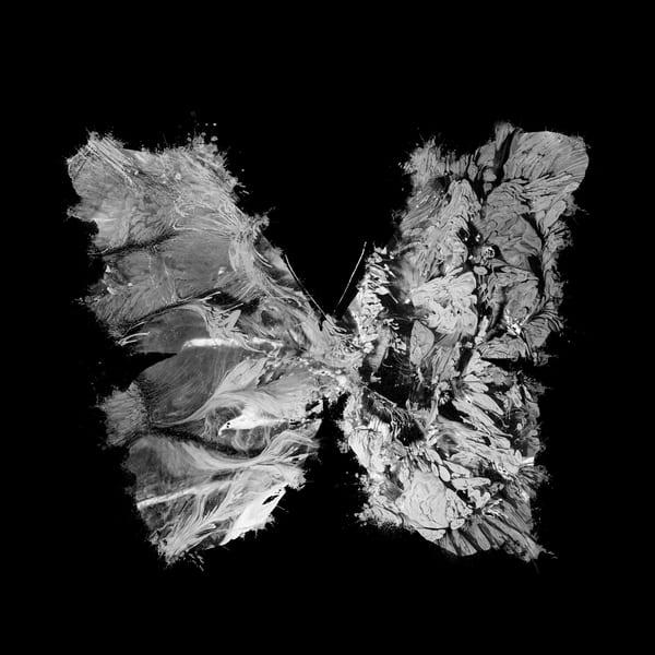 Butterfly 5 Photography Art | Inga Pae