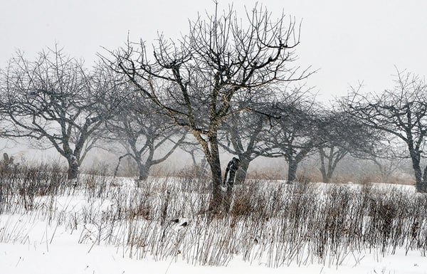 Winter in the Orchard - Michael Sandy Photography