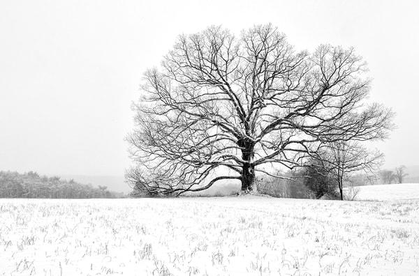 Carbon County Oak - Michael Sandy Photography